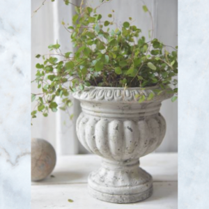 Jeanne d'Arc Living plant pot