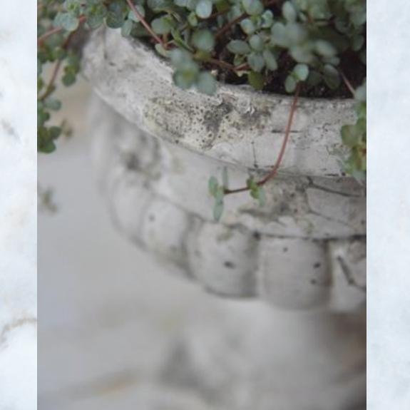 Jeanne d'Arc Living planter